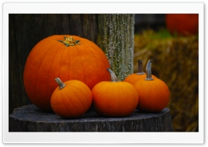 Pumpkins HD Wide Wallpaper for 4K UHD Widescreen desktop & smartphone