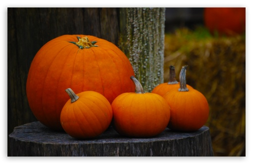 Pumpkins HD wallpaper for Wide 16:10 5:3 Widescreen WHXGA WQXGA WUXGA WXGA WGA ; HD 16:9 High Definition WQHD QWXGA 1080p 900p 720p QHD nHD ; UHD 16:9 WQHD QWXGA 1080p 900p 720p QHD nHD ; Standard 4:3 5:4 3:2 Fullscreen UXGA XGA SVGA QSXGA SXGA DVGA HVGA HQVGA devices ( Apple PowerBook G4 iPhone 4 3G 3GS iPod Touch ) ; Tablet 1:1 ; iPad 1/2/Mini ; Mobile 4:3 5:3 3:2 16:9 5:4 - UXGA XGA SVGA WGA DVGA HVGA HQVGA devices ( Apple PowerBook G4 iPhone 4 3G 3GS iPod Touch ) WQHD QWXGA 1080p 900p 720p QHD nHD QSXGA SXGA ;