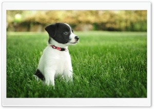 Puppy HD Wide Wallpaper for Widescreen