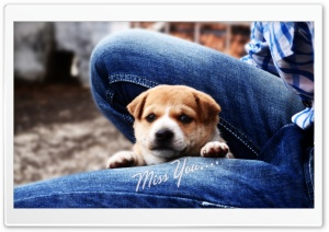 Puppy HD Wide Wallpaper for Widescreen