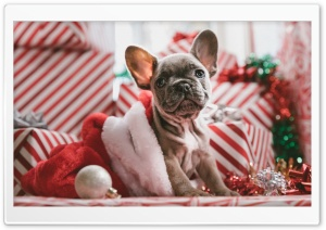 Puppy Present Christmas HD Wide Wallpaper for 4K UHD Widescreen desktop & smartphone