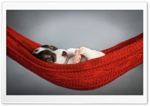 Puppy Sleeping HD Wide Wallpaper for Widescreen