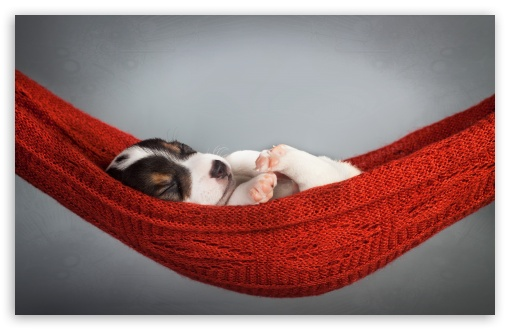 Puppy Sleeping HD desktop wallpaper
