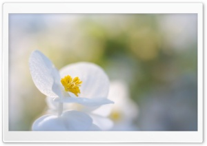 Purity HD Wide Wallpaper for 4K UHD Widescreen desktop & smartphone