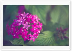 Purple Ultra HD Wallpaper for 4K UHD Widescreen desktop, tablet & smartphone