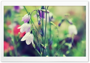 Purple Bells (Flowers) HD Wide Wallpaper for Widescreen