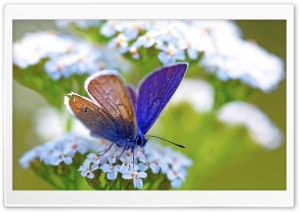 Purple Butterfly HD Wide Wallpaper for Widescreen