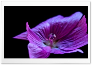 Purple Flower HD Wide Wallpaper for Widescreen