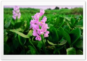 Purple Flower HD Wide Wallpaper for Widescreen