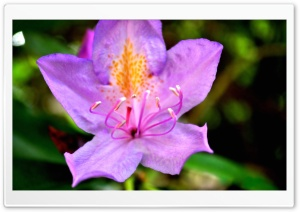 Purple Flower In The Backyard HD Wide Wallpaper for Widescreen