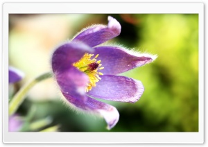 Purple Flower Macro HD Wide Wallpaper for Widescreen