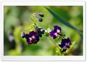 Purple Flowers Ultra HD Wallpaper for 4K UHD Widescreen desktop, tablet & smartphone