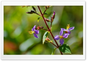 Purple Flowers HD Wide Wallpaper for Widescreen
