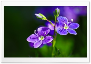 Purple Flowers Close-up HD Wide Wallpaper for Widescreen