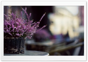 Purple Flowers In A Basket HD Wide Wallpaper for Widescreen
