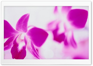 Purple Flowers On White Background HD Wide Wallpaper for Widescreen
