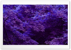 Purple Forest HD Wide Wallpaper for Widescreen