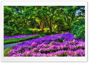 Purple Garden HD Wide Wallpaper for Widescreen