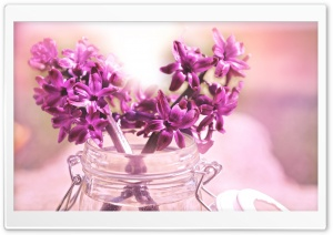 Purple Hyacinth Bouquet HD Wide Wallpaper for Widescreen