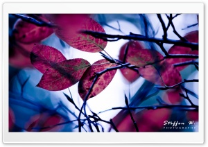 Purple Leaves, Bokeh HD Wide Wallpaper for Widescreen
