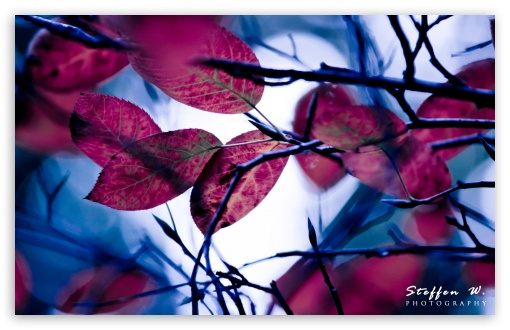Purple Leaves, Bokeh ❤ 4K UHD Wallpaper for Wide 16:10 5:3 Widescreen WHXGA WQXGA WUXGA WXGA WGA ; 4K UHD 16:9 Ultra High Definition 2160p 1440p 1080p 900p 720p ; UHD 16:9 2160p 1440p 1080p 900p 720p ; Standard 4:3 5:4 3:2 Fullscreen UXGA XGA SVGA QSXGA SXGA DVGA HVGA HQVGA ( Apple PowerBook G4 iPhone 4 3G 3GS iPod Touch ) ; Tablet 1:1 ; iPad 1/2/Mini ; Mobile 4:3 5:3 3:2 16:9 5:4 - UXGA XGA SVGA WGA DVGA HVGA HQVGA ( Apple PowerBook G4 iPhone 4 3G 3GS iPod Touch ) 2160p 1440p 1080p 900p 720p QSXGA SXGA ; Dual 5:4 QSXGA SXGA ;