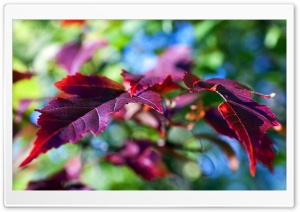 Purple Leaves Macro HD Wide Wallpaper for Widescreen