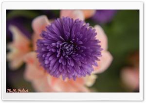 Purple micro