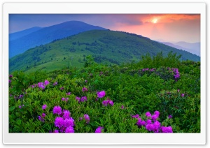 Purple Mountain Flowers HD Wide Wallpaper for Widescreen