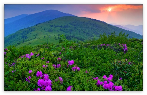 Purple Mountain Flowers HD wallpaper for Wide 16:10 5:3 Widescreen WHXGA WQXGA WUXGA WXGA WGA ; HD 16:9 High Definition WQHD QWXGA 1080p 900p 720p QHD nHD ; Standard 4:3 5:4 3:2 Fullscreen UXGA XGA SVGA QSXGA SXGA DVGA HVGA HQVGA devices ( Apple PowerBook G4 iPhone 4 3G 3GS iPod Touch ) ; Tablet 1:1 ; iPad 1/2/Mini ; Mobile 4:3 5:3 3:2 16:9 5:4 - UXGA XGA SVGA WGA DVGA HVGA HQVGA devices ( Apple PowerBook G4 iPhone 4 3G 3GS iPod Touch ) WQHD QWXGA 1080p 900p 720p QHD nHD QSXGA SXGA ; Dual 16:10 5:3 16:9 WHXGA WQXGA WUXGA WXGA WGA WQHD QWXGA 1080p 900p 720p QHD nHD ;