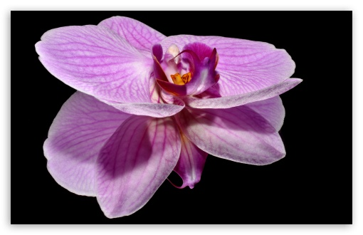 Purple Orchid Flower Reflection ❤ 4K UHD Wallpaper for Wide 16:10 5:3 Widescreen WHXGA WQXGA WUXGA WXGA WGA ; 4K UHD 16:9 Ultra High Definition 2160p 1440p 1080p 900p 720p ; UHD 16:9 2160p 1440p 1080p 900p 720p ; Standard 4:3 5:4 3:2 Fullscreen UXGA XGA SVGA QSXGA SXGA DVGA HVGA HQVGA ( Apple PowerBook G4 iPhone 4 3G 3GS iPod Touch ) ; Smartphone 5:3 WGA ; Tablet 1:1 ; iPad 1/2/Mini ; Mobile 4:3 5:3 3:2 16:9 5:4 - UXGA XGA SVGA WGA DVGA HVGA HQVGA ( Apple PowerBook G4 iPhone 4 3G 3GS iPod Touch ) 2160p 1440p 1080p 900p 720p QSXGA SXGA ; Dual 16:10 5:3 16:9 4:3 5:4 WHXGA WQXGA WUXGA WXGA WGA 2160p 1440p 1080p 900p 720p UXGA XGA SVGA QSXGA SXGA ;