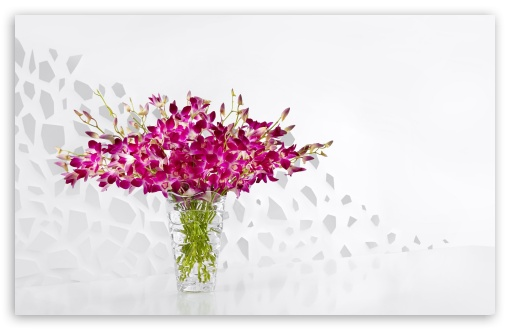 Purple Orchids in a Glass Vase ❤ 4K UHD Wallpaper for Wide 16:10 5:3 Widescreen WHXGA WQXGA WUXGA WXGA WGA ; 4K UHD 16:9 Ultra High Definition 2160p 1440p 1080p 900p 720p ; UHD 16:9 2160p 1440p 1080p 900p 720p ; Standard 4:3 5:4 3:2 Fullscreen UXGA XGA SVGA QSXGA SXGA DVGA HVGA HQVGA ( Apple PowerBook G4 iPhone 4 3G 3GS iPod Touch ) ; Smartphone 3:2 5:3 DVGA HVGA HQVGA ( Apple PowerBook G4 iPhone 4 3G 3GS iPod Touch ) WGA ; Tablet 1:1 ; iPad 1/2/Mini ; Mobile 4:3 5:3 3:2 16:9 5:4 - UXGA XGA SVGA WGA DVGA HVGA HQVGA ( Apple PowerBook G4 iPhone 4 3G 3GS iPod Touch ) 2160p 1440p 1080p 900p 720p QSXGA SXGA ; Dual 16:10 5:3 16:9 4:3 5:4 WHXGA WQXGA WUXGA WXGA WGA 2160p 1440p 1080p 900p 720p UXGA XGA SVGA QSXGA SXGA ;