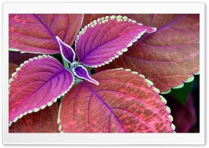 Purple Plant HD Wide Wallpaper for Widescreen