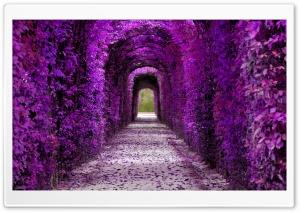 Purple Plant Tunnel, Aesthetic Ultra HD Wallpaper for 4K UHD Widescreen desktop, tablet & smartphone