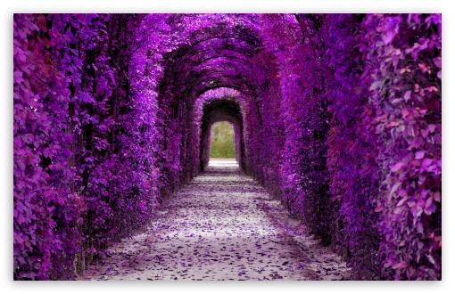 Purple Plant Tunnel, Aesthetic UltraHD Wallpaper for Wide 16:10 5:3 Widescreen WHXGA WQXGA WUXGA WXGA WGA ; UltraWide 21:9 24:10 ; 8K UHD TV 16:9 Ultra High Definition 2160p 1440p 1080p 900p 720p ; UHD 16:9 2160p 1440p 1080p 900p 720p ; Standard 4:3 5:4 3:2 Fullscreen UXGA XGA SVGA QSXGA SXGA DVGA HVGA HQVGA ( Apple PowerBook G4 iPhone 4 3G 3GS iPod Touch ) ; Smartphone 16:9 3:2 5:3 2160p 1440p 1080p 900p 720p DVGA HVGA HQVGA ( Apple PowerBook G4 iPhone 4 3G 3GS iPod Touch ) WGA ; Tablet 1:1 ; iPad 1/2/Mini ; Mobile 4:3 5:3 3:2 16:9 5:4 - UXGA XGA SVGA WGA DVGA HVGA HQVGA ( Apple PowerBook G4 iPhone 4 3G 3GS iPod Touch ) 2160p 1440p 1080p 900p 720p QSXGA SXGA ;
