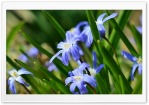 Purple Spring Flowers HD Wide Wallpaper for Widescreen