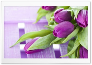Purple Tulips HD Wide Wallpaper for 4K UHD Widescreen desktop & smartphone