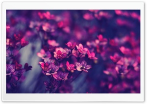 Purple Wildflowers HD Wide Wallpaper for Widescreen