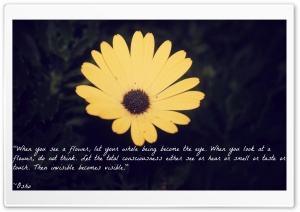 Quote by Osho HD Wide Wallpaper for Widescreen