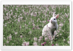Rabbit In Flower Field HD Wide Wallpaper for 4K UHD Widescreen desktop & smartphone
