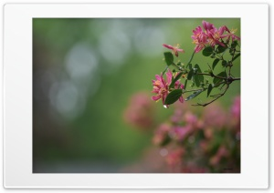 Rain2 Ultra HD Wallpaper for 4K UHD Widescreen desktop, tablet & smartphone