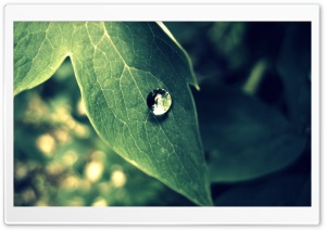 Rain Drop Macro HD Wide Wallpaper for Widescreen