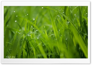 Rain drops Ultra HD Wallpaper for 4K UHD Widescreen desktop, tablet & smartphone