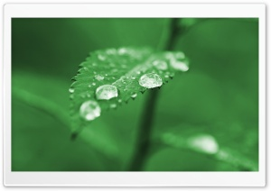 Rain Drops Macro HD Wide Wallpaper for Widescreen