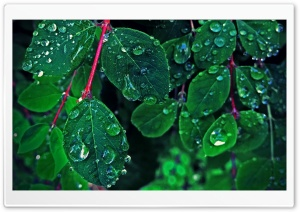Rain On The Leaves HD Wide Wallpaper for Widescreen
