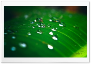 Rain Water Drops HD Wide Wallpaper for Widescreen