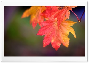 Rainbow Autumn HD Wide Wallpaper for Widescreen