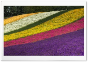Rainbow Fields HD Wide Wallpaper for Widescreen