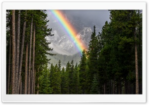 Rainbow, Forest, Banff National Park HD Wide Wallpaper for 4K UHD Widescreen desktop & smartphone