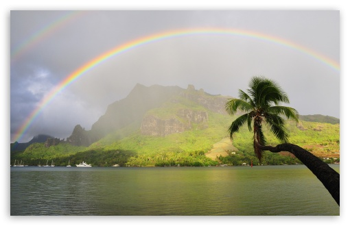 Rainbow Over Cooks Bay, Moorea, French Polynesia ❤ 4K UHD Wallpaper for Wide 16:10 5:3 Widescreen WHXGA WQXGA WUXGA WXGA WGA ; 4K UHD 16:9 Ultra High Definition 2160p 1440p 1080p 900p 720p ; Standard 4:3 5:4 3:2 Fullscreen UXGA XGA SVGA QSXGA SXGA DVGA HVGA HQVGA ( Apple PowerBook G4 iPhone 4 3G 3GS iPod Touch ) ; Tablet 1:1 ; iPad 1/2/Mini ; Mobile 4:3 5:3 3:2 16:9 5:4 - UXGA XGA SVGA WGA DVGA HVGA HQVGA ( Apple PowerBook G4 iPhone 4 3G 3GS iPod Touch ) 2160p 1440p 1080p 900p 720p QSXGA SXGA ;