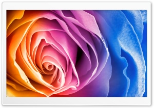 Rainbow Rose HD Wide Wallpaper for Widescreen